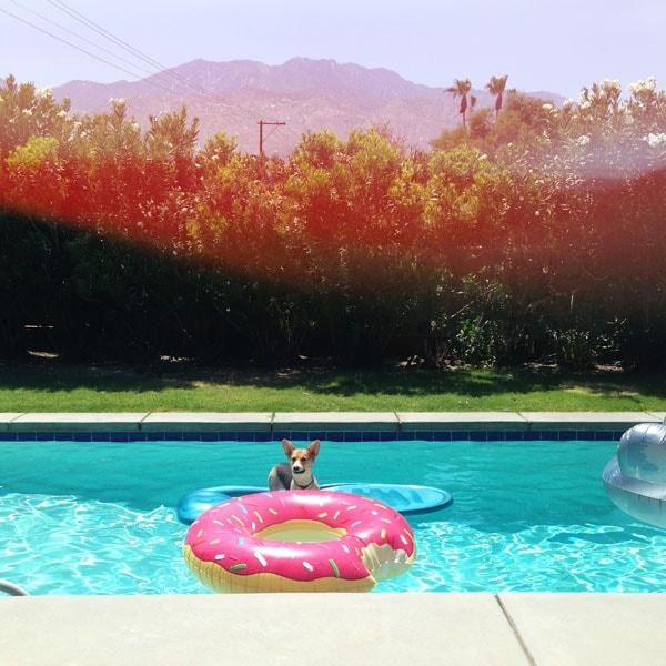 Amelia in Palm Springs