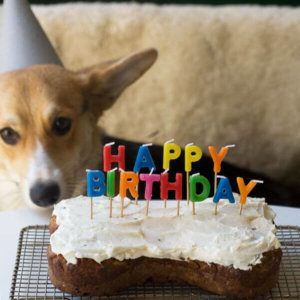 Terrific Dog Birthday Cake Grain Free And Full Of Carrots A Cozy Kitchen Funny Birthday Cards Online Elaedamsfinfo