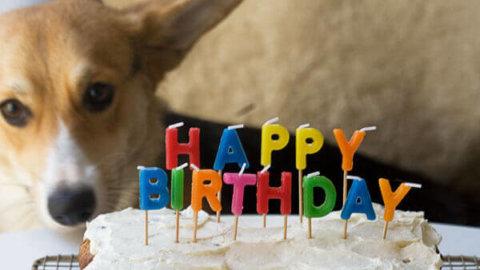 Astounding Dog Birthday Cake Grain Free And Full Of Carrots A Cozy Kitchen Personalised Birthday Cards Veneteletsinfo