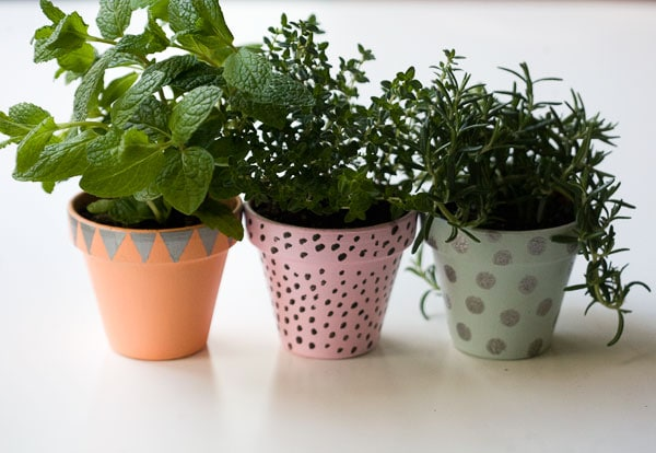 DIY: Last Minute Hostess Gift - Potted Winter Herbs // www.acozykitchen.com