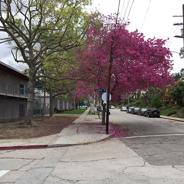 FlowerTrees